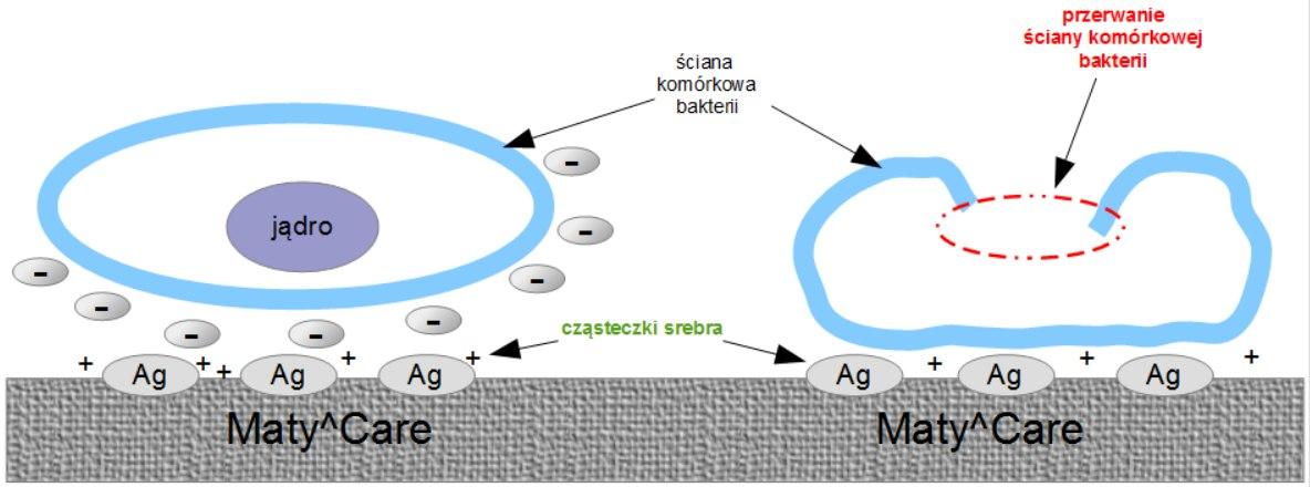 przerwanie ściany komórkowej bakterii
